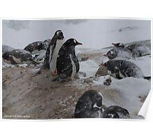 Penguin 010 Poster
