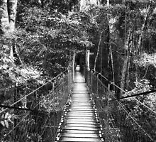 Tree top walk Bridge by Danielle Espin