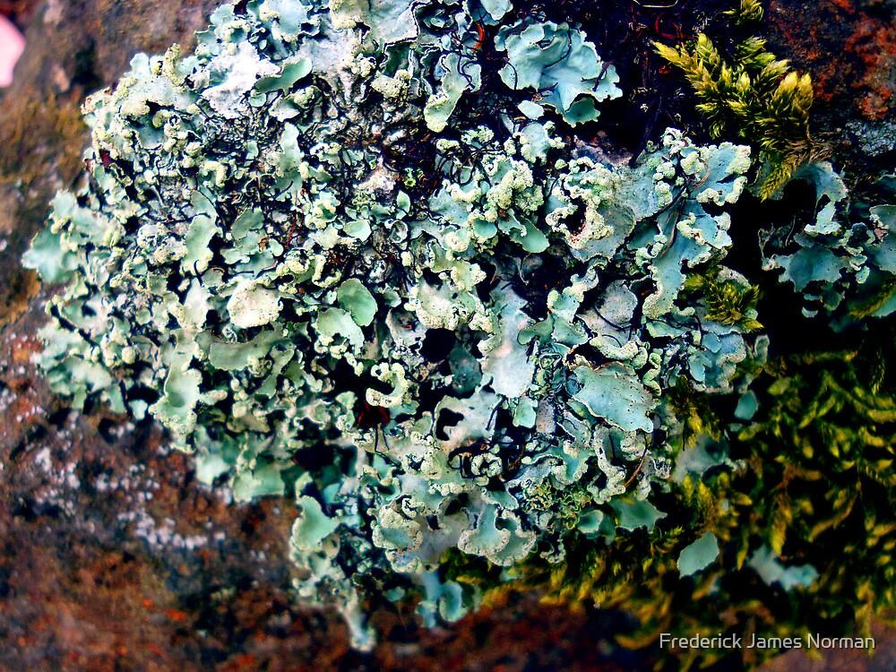 Lichen # 43 by Frederick James Norman