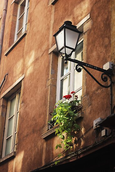 Life on a windowsill - photography print by MarinaCalin