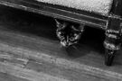 Hiding (black and white) by Nevermind the Camera Photography