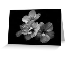 Maturing beauty Greeting Card