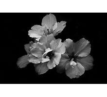 Maturing beauty Photographic Print