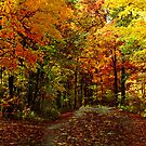Drive Through the Colors by Leann  Rardin