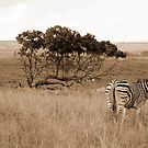 Vintage Stripes by Shaun Colin Bell