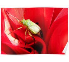 Handsome bug.. Poster