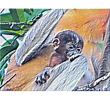 CLING TO SURVIVAL Photographic Print