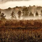 Misty Morning Meadow II - Cranberry Wilderness by Dan Carmichael