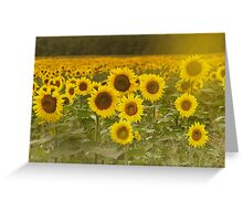 Sunlit field of Sunflowers Greeting Card
