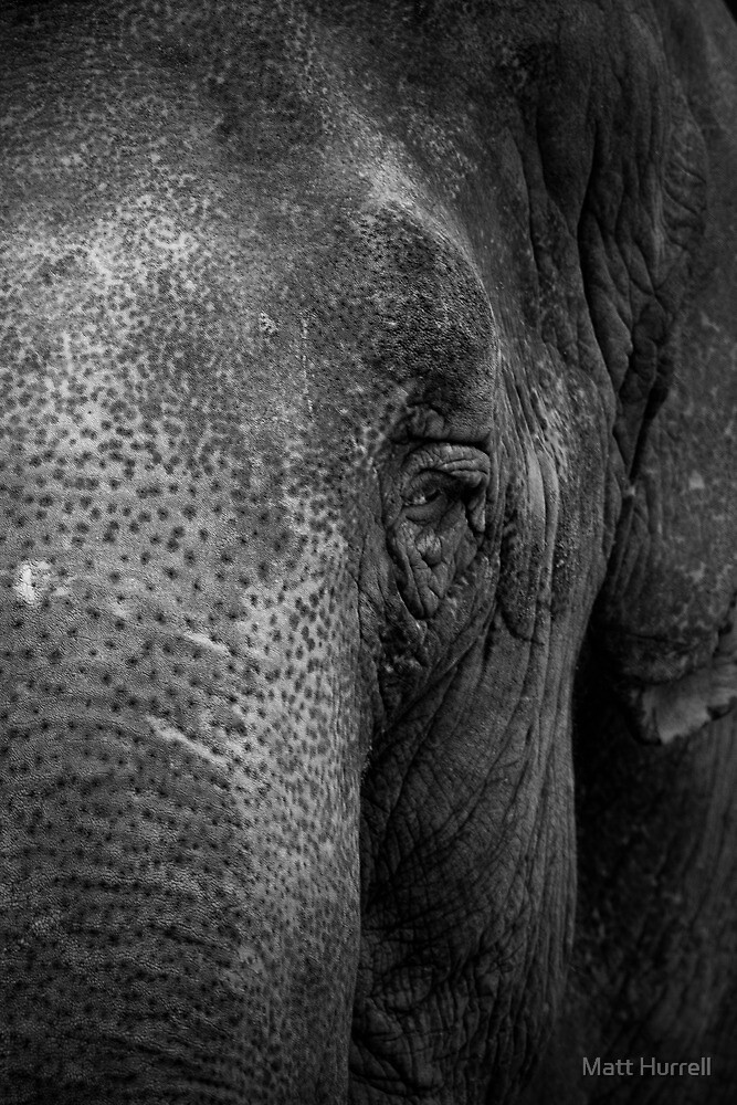 Elephant by Matt Hurrell