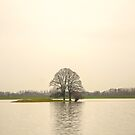 tree in high water by Nicole W.