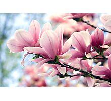 Heavenly Magnolias Photographic Print