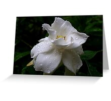 Delicate and Fragrant Gardenia Greeting Card