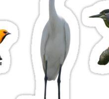 Birds of Trinidad & Tobago 02 Sticker