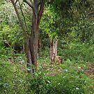 A walk in the the wild by JenniferLouise
