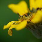 Grasshopper_1 by KarenEaton