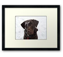 Frosty Lab Framed Print