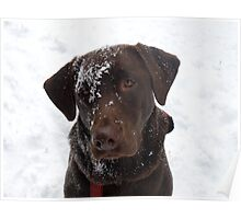 Frosty Lab Poster
