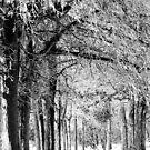 Winter wonderland by Leann  Rardin