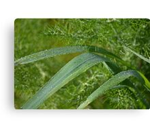 The feathered greenery of wild Fennel Canvas Print