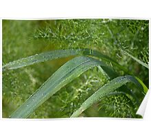 The feathered greenery of wild Fennel Poster