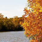 Fall Leaves by the Lake by Steph Peesker
