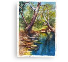 Dandenong Creek in December Heat Canvas Print