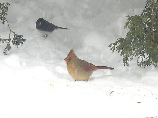 Pecking for seeds in the white abyss by MarianBendeth