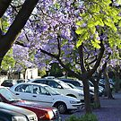Drifts of Jacaranda Blossom, Napier St, South Melbourne by Helen Greenwood