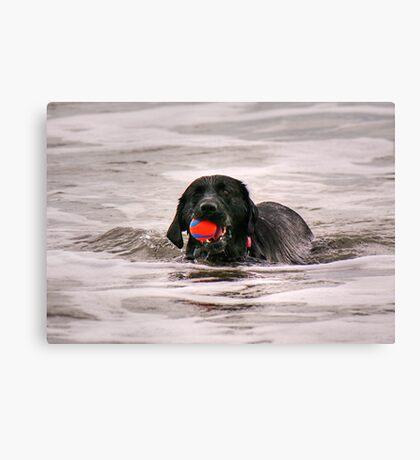 Red ball, Black dog..........!  Canvas Print