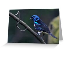 Turquoise Tanager Greeting Card