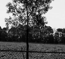 bottle tree by Lilyan Flett
