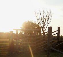 cattle yards by Lilyan Flett