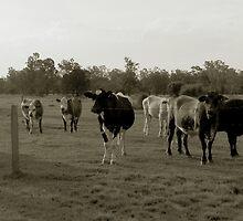 cattle by Lilyan Flett
