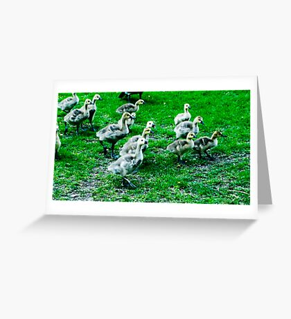 Streams of Ducklings Greeting Card