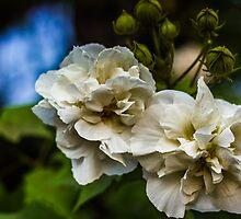 White Flower by Gunardi Nurkamal