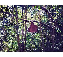 Hidden Birdhouse Photographic Print