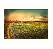 Late  light Sheep Ranch Art Print