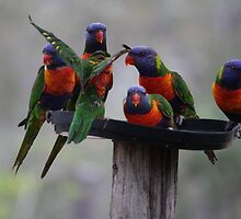 Lorikeet Frenzy by Cassie Robinson