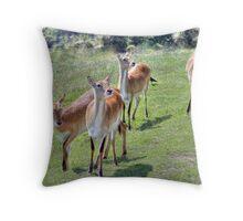 Red Lechwe Antelope Throw Pillow