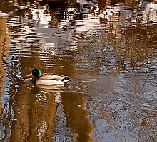 Chilly Winter Swim by Sandy Woolard