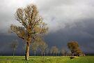 Dark Sky by Jo Nijenhuis