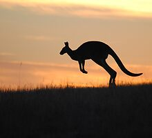 Kangaroo in Silhouette - Whittlesea, Victoria by Heather Samsa