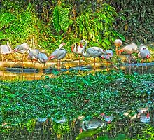 Flamingo by Giovanni Costa