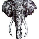 elephant by Szymon Marciniak