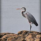 Blue Heron by Kate Adams