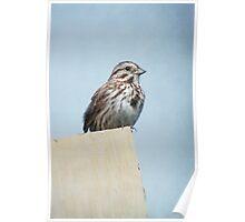 Female Purple Finch ~ Poster