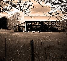 Over The fence Sheep Chew Mail Pouch Barn by Randy Branham