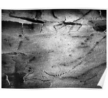 Black & White Abstract Bark # 2 Poster