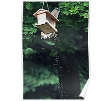 The Reason I Spend So Much On Birdseed . . . Poster